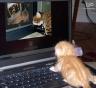 Friends' cat!